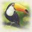 the-maltese-toucan