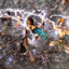 the-ultimate-musou